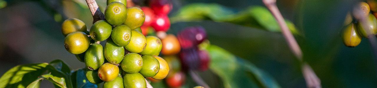 bio-kaffeedZgehFmrE7Ata