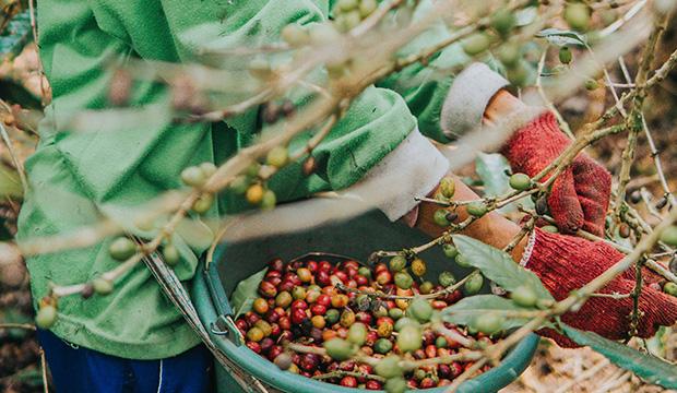 Direct Fairtrade